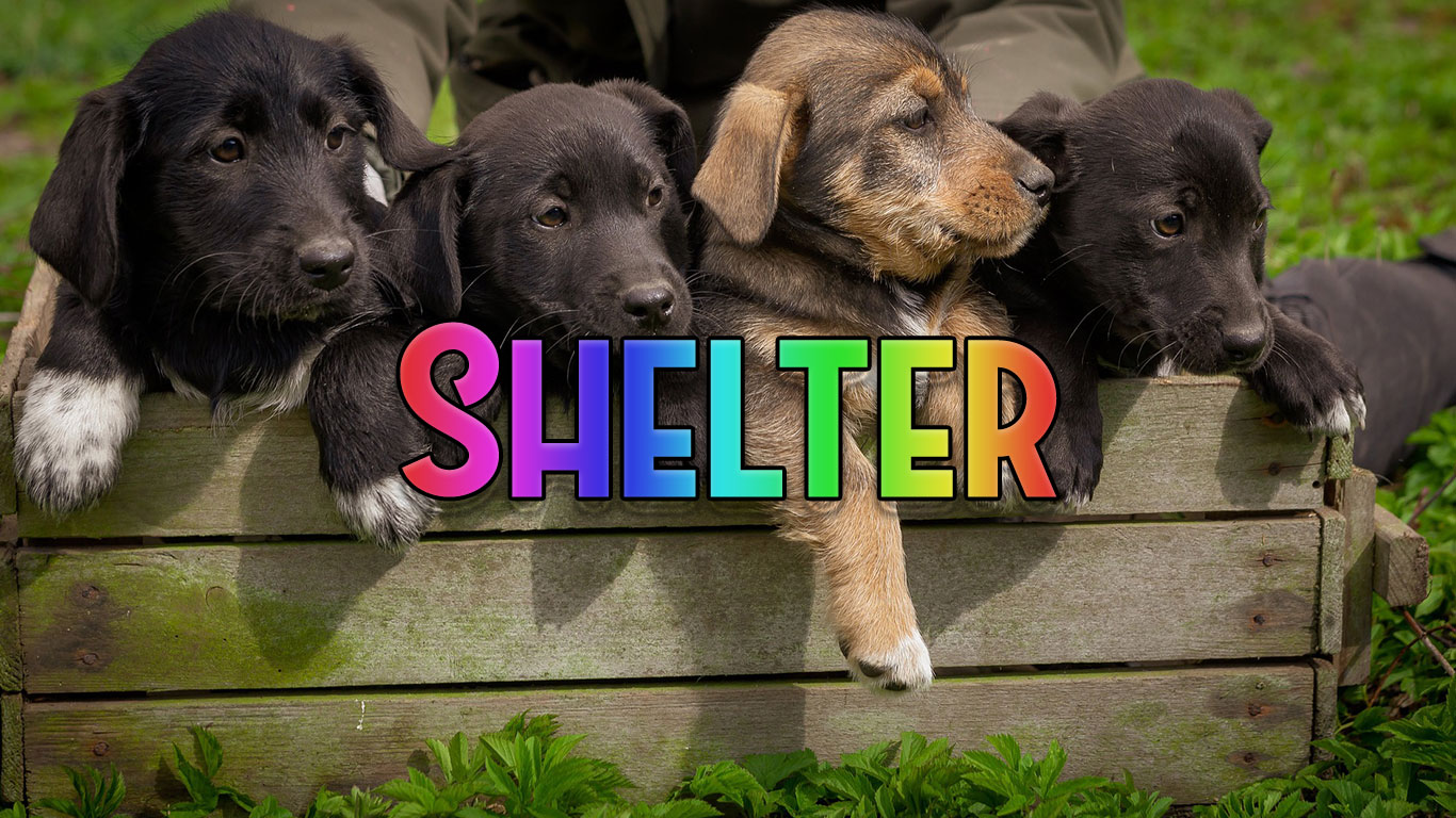 Logo for the Shelter.co.uk domain name